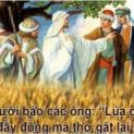 18/10 Lúa chín đầy đồng mà thợ gặt thì ít