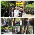 Đi du lịch Mystery Spot thăm ngôi nhà nghiêng (thành phố Santa Cruz, California, Mỹ)