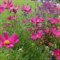 Cánh Bướm Vườn Xuân